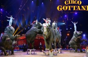 Vuelve el Circo Gottani